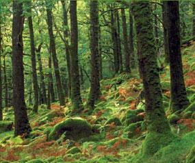 Mossy English woodland